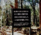 File:Aokigahara-forest-of-suicides-002.jpg