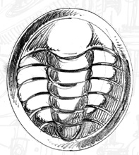 File:Trilobadge.jpg