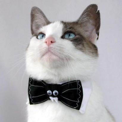 File:Batty kitty.jpg