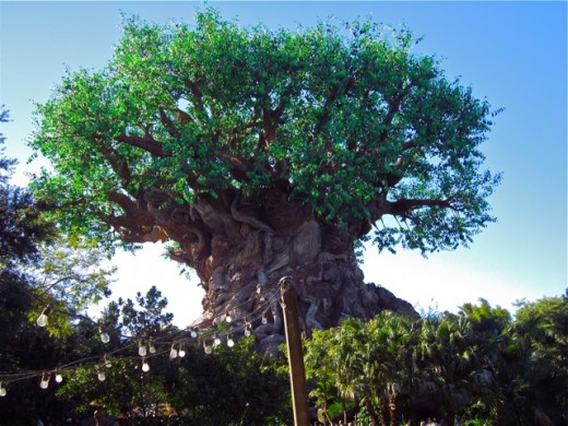 File:Disney's Animal Kingdom.jpg