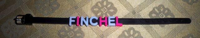 File:Finchel Bracelet.jpg