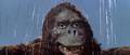 King Kong vs. Godzilla - 56 - Good Morning I Guess
