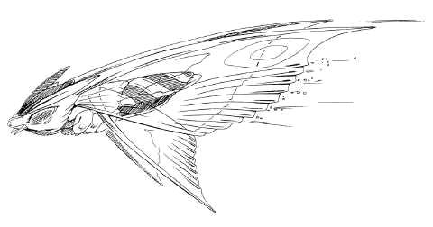 File:Concept Art - Rebirth of Mothra 2 - Aqua Mothra 11.png