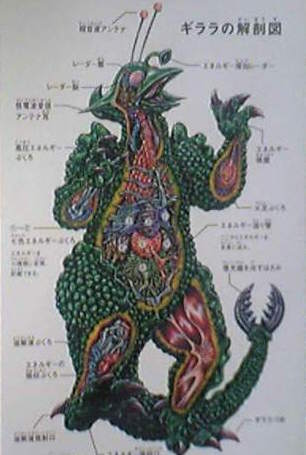 File:Guilala anatomy.jpg