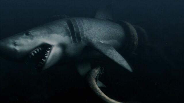 File:Sharkstruggle.jpg