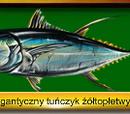 Gigantyczny Tuńczyk żółtopłetwy
