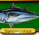 Gigantyczny tuńczyk