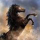 Khal Drogo's Stallion
