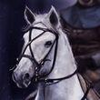 Lyanna Stark's Horse