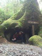 Mystery Tour 2013 Tree