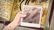 Short6 The Hide behind's foot prints