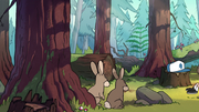 S1e6 rabbits in forest