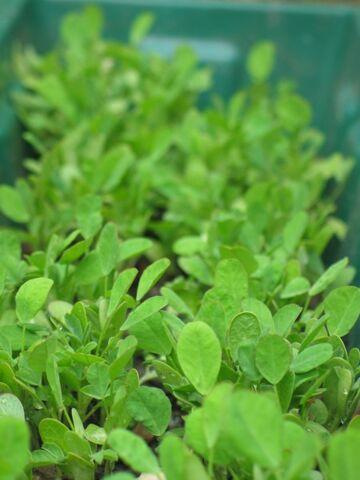 File:Plante.jpg