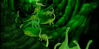 Green Herd Longnecks