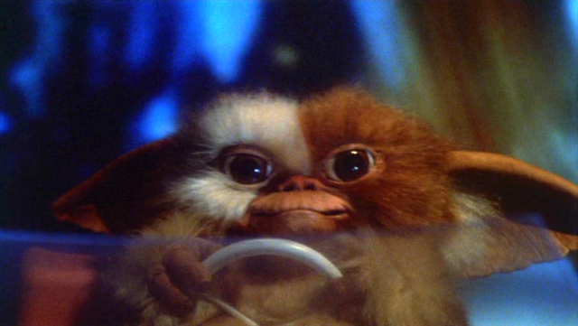File:Gizmo-First.PNG