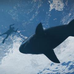 A shark in GTA V.