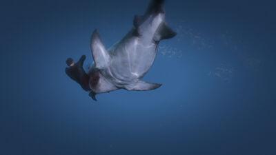 Shark beast eat
