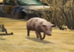Pig-GTAV