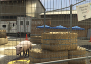 Director Mode Actors GTAVpc Animals Pig