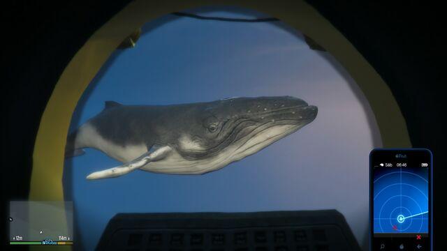 File:Humpback Whale-GTAV-Seen-From-Sub.jpg