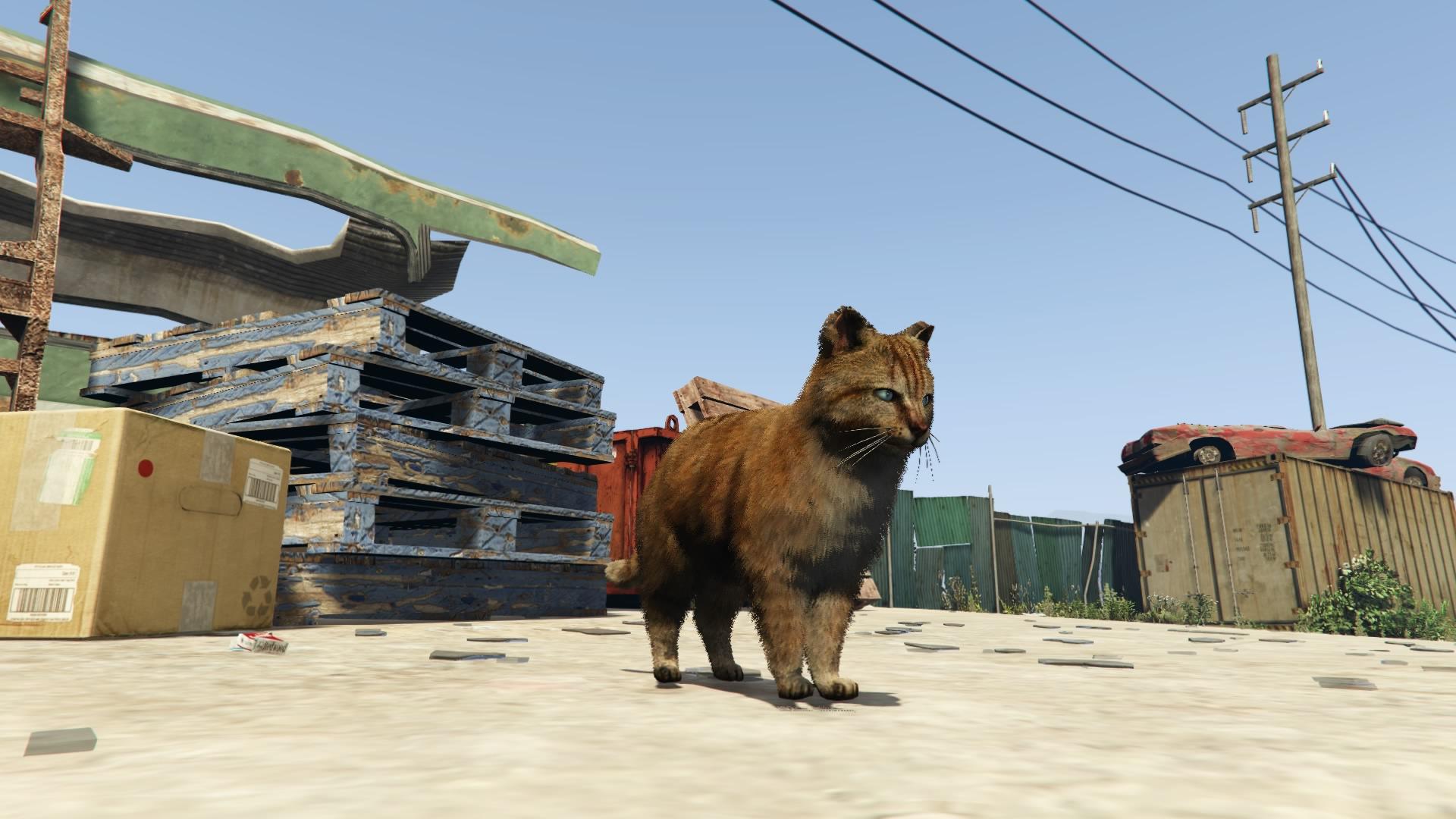 Cats | GTA Wiki | FANDOM powered by Wikia