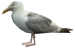 Seagull-EFLC
