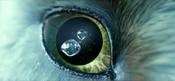 Eye of the Owl