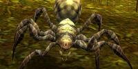 Moss Spider