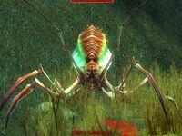 Debrio Gangleweb