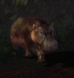 File:Aggressive Hippopotamus.jpg