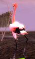 Thumbnail for version as of 21:08, September 22, 2006