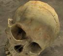 Skull/Halo 2
