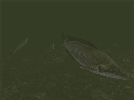 File:Fish117.jpg