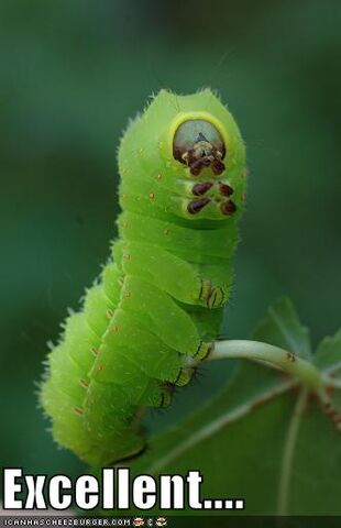 File:1216587093 Funny-pictures-caterpillar-makes-tv-reference.jpg