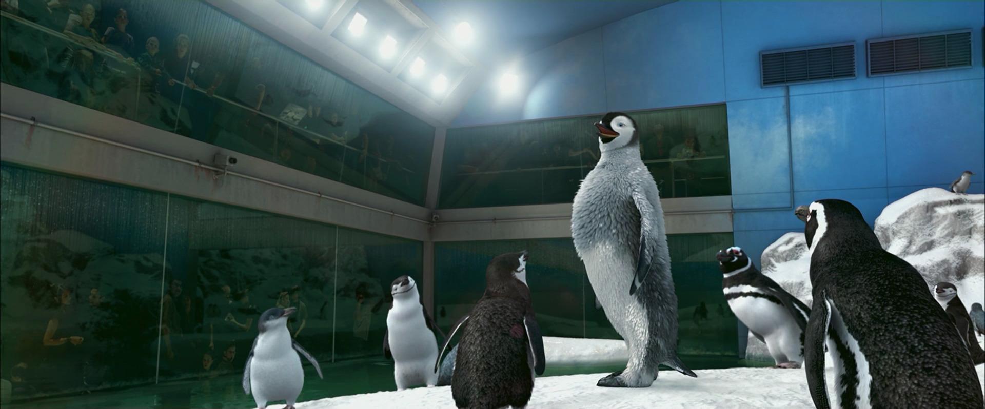 Happy feet... And flippers! | PerthNow |Happy Feet Zoo Aquarium