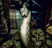 File:My Beloved Nagini.jpg