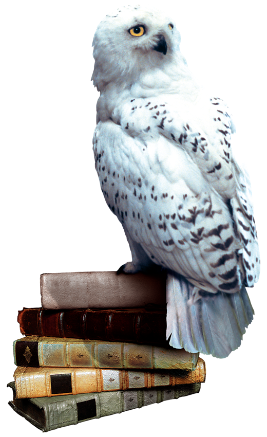 Hedwig On Books Cake