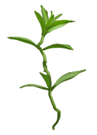 File:Fluxweed.png