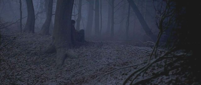 File:Harry Potter at the Forest.jpg