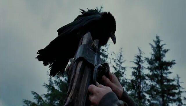 File:Unidentified crow.jpg