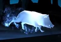 Wild Boar Patronus