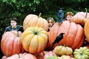 Pumpkin hp3