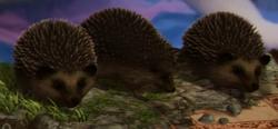 KnarlAndHedgehogs