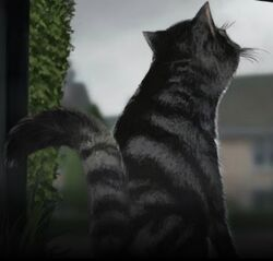 McG Cat Pottermore