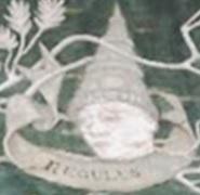 File:Regulus on Tree 4.jpg