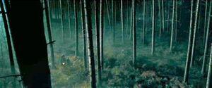 Forbidden Forest GOF 1