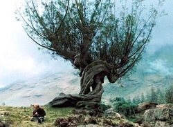 Whomping Willow PA