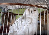 Hedwigcar