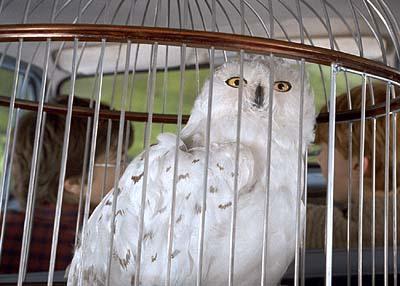 Bestand:Hedwigcar.jpg