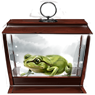 Common-toad.png